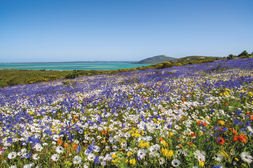 west coast wildflowers