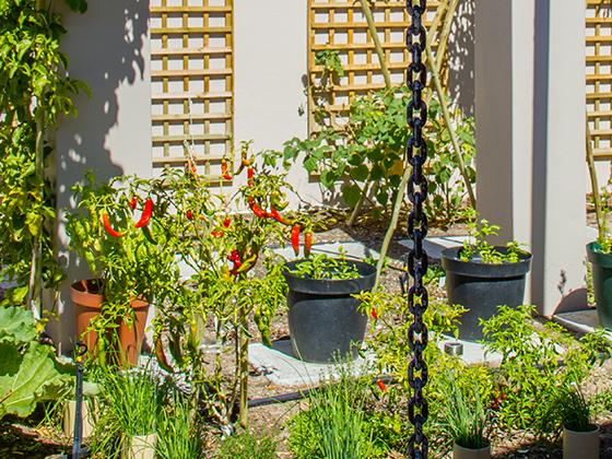 IMG_3046-garden