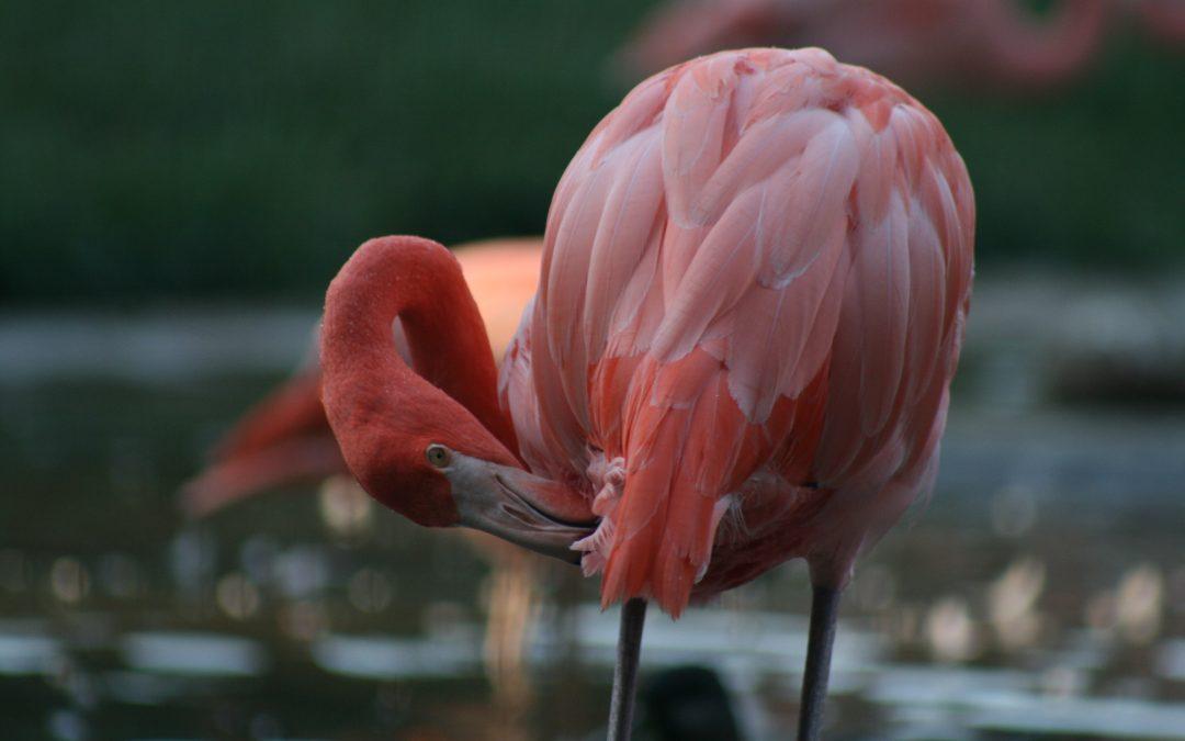 Birdwatching in Velddrif